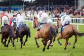 Spotting The Horse Racing System