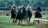 Sensational New Winning Horse Racing System
